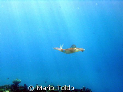 flying squid in the sunny sea by Mario Toldo