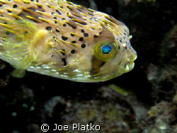 puffy; found off Curacao. I wanted to get the cool reflec... by Joe Platko