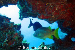Photo taken July 2008 in Grand Cayman with a Canon SD550. by Bonnie Conley