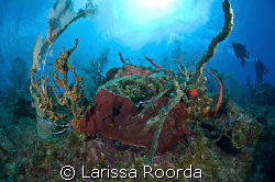 Fisheye coral head shot.  Playing with fish-eye for the f... by Larissa Roorda