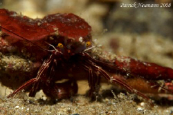 Also Crabs in Anilao :) taken wit Canon 400D/Hugyfot hous... by Patrick Neumann