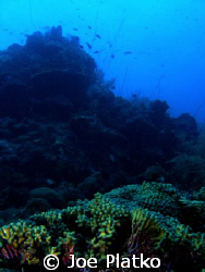 shot of the colorful reef found at Curacao. This was take... by Joe Platko