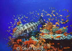 reefscene, Northern Red Sea by Geoff Spiby