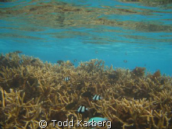Coral Reflection by Todd Karberg