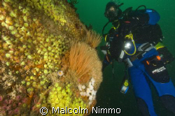 A nice reef  - Isles of Scilly, UKl  by Malcolm Nimmo