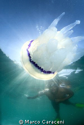 JELLYFISH AND YOUNG DIVER by Marco Caraceni