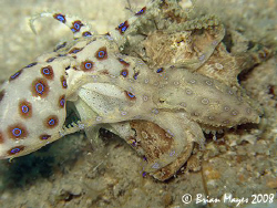 The moment of separation for three Midring Blue Ring Octo... by Brian Mayes