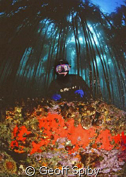 snorkeller in the kelp forest, False Bay, Cape Town by Geoff Spiby