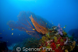 Similan islands thailand, 12-24mm lens by Spencer Finn
