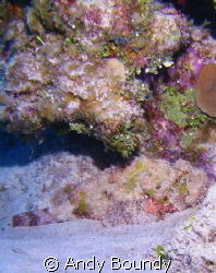 Spot the Scorpion Fish! This chap was sitting on the bott... by Andy Boundy