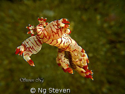 Free swimming nudi. Taken with A640, single macro lens wi... by Ng Steven