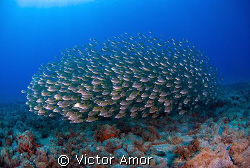 Fish ball by Victor Amor