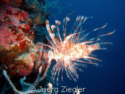 Red Alert !