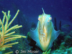 A Squid stopped and posed for me unexpectedly. taken with... by Jim Moser