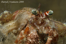 Crab Anilao, Philippines taken with Canon 400D/Hugyfot ho... by Patrick Neumann