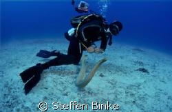 Diver and Seasnake by Steffen Binke