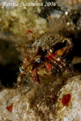 should i jump or should i stay :))) Crab Anilao, Philipp... by Patrick Neumann