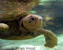 Hello Turtle by Pam Wood
