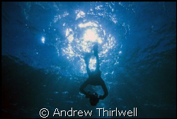 Freediving off Sydney in natural light by Andrew Thirlwell