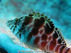 coral hawkfish perched on barrel sponge @ Seraya beach, T... by Michelle Choong_khoo