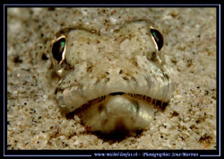 Stop looking at me... :O) by Michel Lonfat