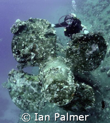 Diver on one of the props of the Salem Express ( natural ... by Ian Palmer