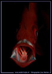 Big mouth :O) by Michel Lonfat