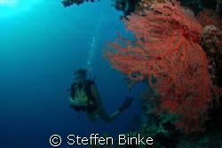 pretty sea fan and more pretty diver in the great barrier... by Steffen Binke