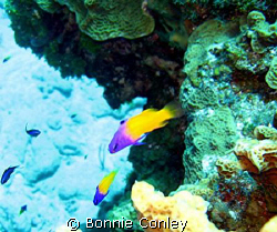Photo taken in Grand Cayman July 2008 with a Canon SD550. by Bonnie Conley