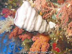 Coral  garden by Bea & Stef Primatesta