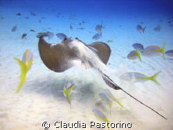 Hurry up!!! by Claudia Pastorino