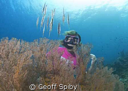 Lyn watching a school of shrimpfish hovering over a gorgo... by Geoff Spiby