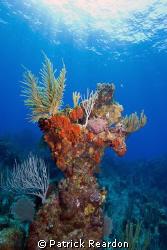 Beautiful diving on Grand Cayman. by Patrick Reardon