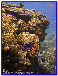 Beautiful reef of Batu Abah, Bali (Canon G9) by Marco Waagmeester