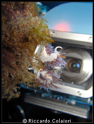 Taking a shoot of Nudi's with Canon Powershot. by Riccardo Colaiori