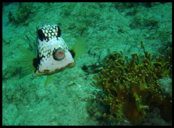 whistling fish....lol by Durand Gerald