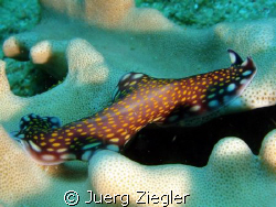 Flatworm in action... by Juerg Ziegler