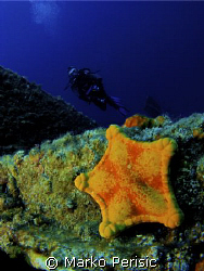 A Flat star on the wreck of the Teti sunk 1930 Komiza Vis. by Marko Perisic