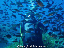 """""""Follow me"""". Typical view in the Mediterranean Sea. Posid... by Bea & Stef Primatesta"""
