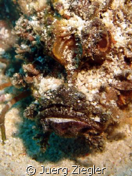Eye to Eye with Devil Fish ! by Juerg Ziegler