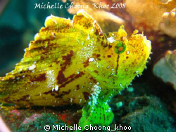 Leaf Scorpionfish hanging out at Liberty Wreck-Tulamben, ... by Michelle Choong_khoo