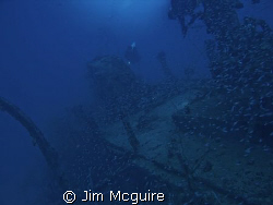 This sunken ship from WWII provides a safe haven for thou... by Jim Mcguire