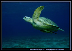 The take off of a green Turtel towards the surface.... :O) by Michel Lonfat