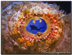 """The Eye"" of a False Stonefish (Canon G9, D2000w, UCL165) by Marco Waagmeester"