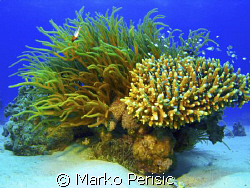 Red Sea reef seen  by Marko Perisic