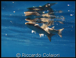 On the surface Canon Digital Ixus 700 + Canon Housing WP... by Riccardo Colaiori