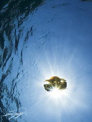 Jellyfish & Sunburst by Nicholas Samaras