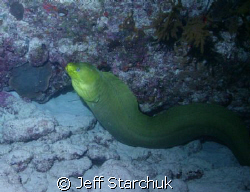 My first night dive and I met this nice fellow. by Jeff Starchuk