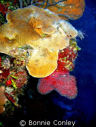 Photo taken July 2008 at Grand Cayman with a Canon SD550. by Bonnie Conley