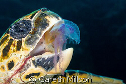 Spent around twenty minutes swimming with this guy, going... by Gareth Millson